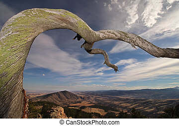 A twisted tree limb extends outward over the foothills of...