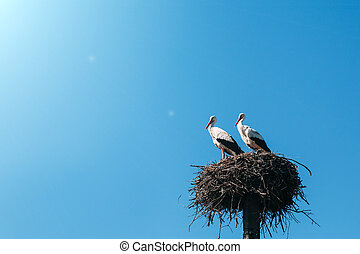 a two storks in the nest
