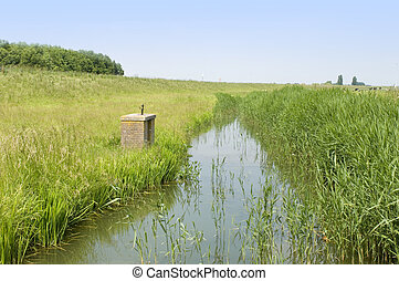 A typical Dutch Polder with a small, muddy, ditch and grazing cows on a nice summer afternoon