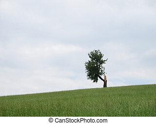 a, unique, arbre, après, éclair, grève