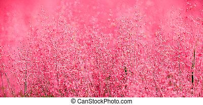 a, vacker, rosa, scen, av, natur