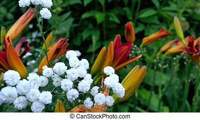 A varierty of flowers in the garden