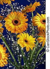 A vase full of Golden Gerberas (Asteraceae) flowers