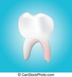 healthy molar tooth