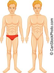 A Vector of Human Body