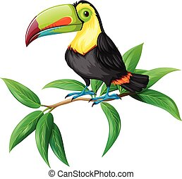 A Vector of Toucan on White Background