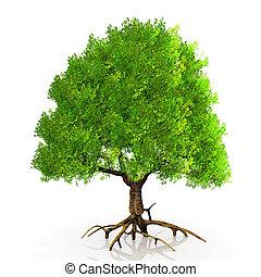 a very big green tree