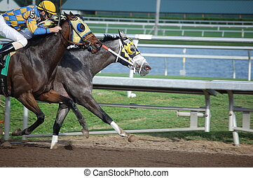 A Very Close Horse Race