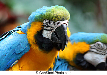 Macaw - A very colorful, friendly and playful Macaw.