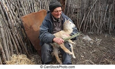 A very old sick man sits on a stool holding a goat in his hands, playing and feeding. Life in the village. Concept of natural economy.