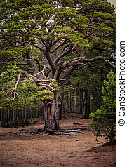 A vibrant loch side tree - A shot of a vibrant loch side...