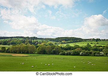 Northumberland - A vibrant Northumberland summer landscape...