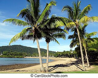 A view of a beach in Queensland with Palm Trees