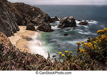 A view of a beach in the Point Reyes National Park, California, gorse frames the view to the beach