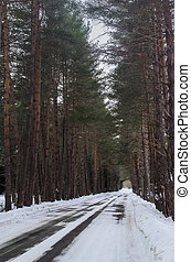 A view of a winter mountain road covered with snow and sand in a pine forest. Asphalt road under the snow. The concept of the seasons and winter travel. Winter forest