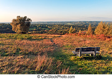 A view of Ashdown Forest in East Sussex