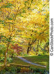 A view of brilliant fall foliage.