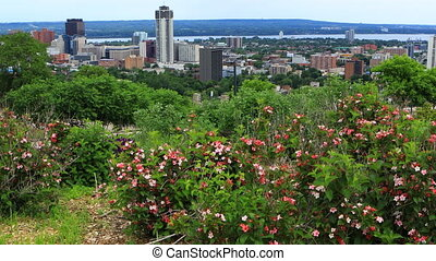 View of Hamilton, Canada, city center with flowers in foreground