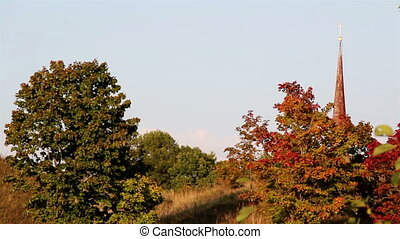 A view of red and green leaves from different trees