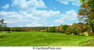 view of the french countryside at summer time