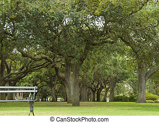 A view of the many large Live Oak Trees in Battery Park with a park bench in the foreground