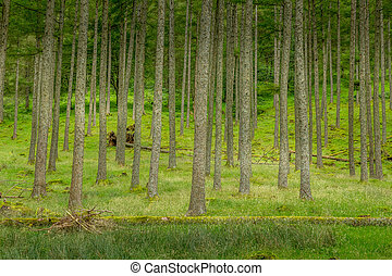 A view of the trees in a woodland coppice - A view of the ...