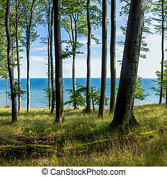 A view of thick deciduous forest with lush green vegetation and blue ocean behind