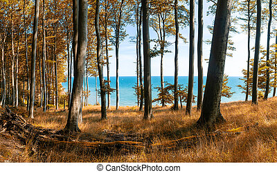 A view of thick deciduous in fall colors with blue ocean behind