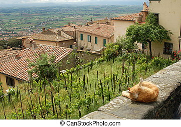 A view of Tuscany