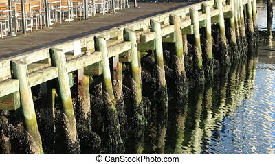 View of wooden wharf pilings with reflections - A View of...