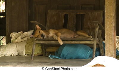 A village dog asleep on a wooden seat, Myanmar - Captivating...