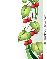 Illustration of a vine plant with fruits on a white background