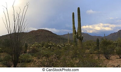 Vista view in Tucson Mountain Park - A Vista view in Tucson...