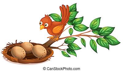 a, vogel- aufpassen, der, eier