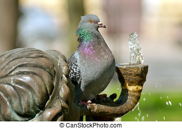 a, vogel, sitzen, auf, der, fountain.