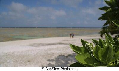 A Walk At The Beach, Lady Elliot Island