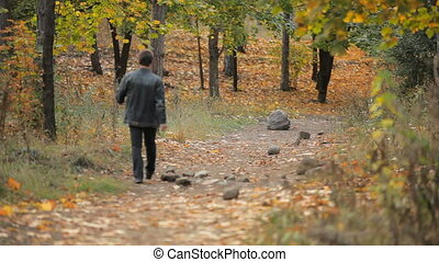 A walk in the autumn forest
