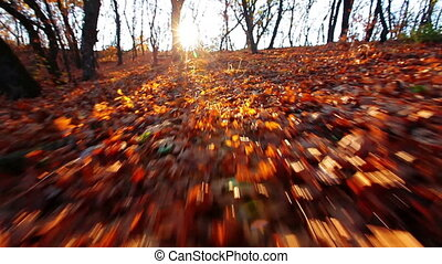 a walk is in the autumn forest