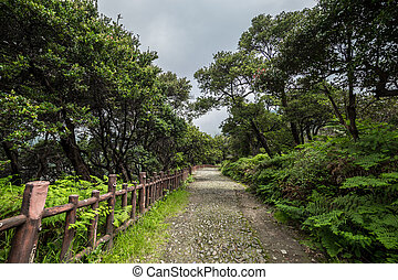 A walking path and fence in a tropical forest