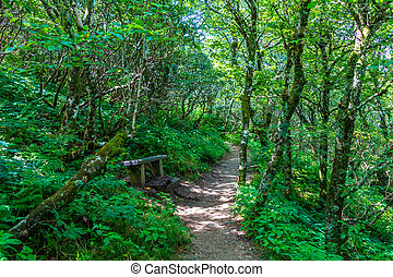 Trail Through Blue Ridge Mountains