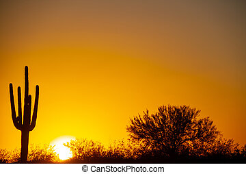 The sun setting over the desert under a cloudless sky with a saguaro cactus in the foreground.