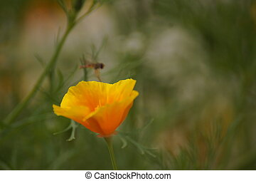 A wasp over a flower yellow