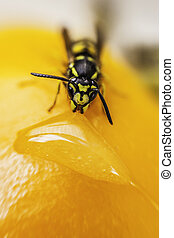 a wasp while eating