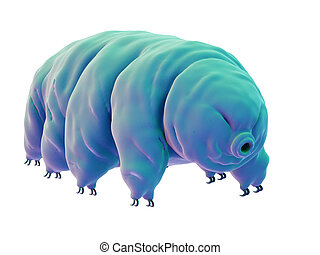 a water bear - medically accurate illustration of a water...