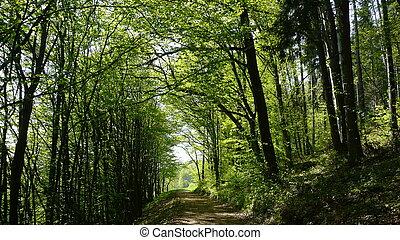 a, weg innen, der, wälder