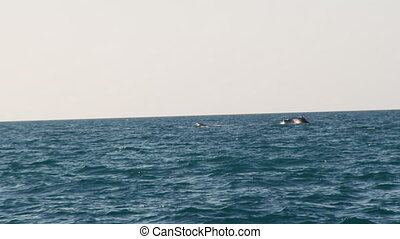 A whale at sight on the wide sea