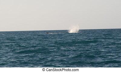 A whale splashing its tail