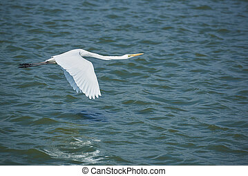 A white crane flying over the water