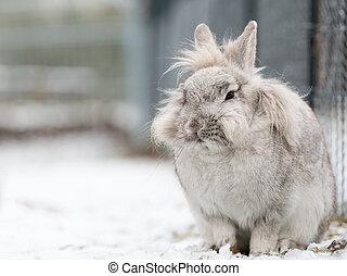 A white dwarf rabbit sitting in the snow