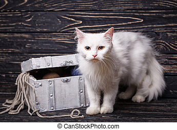 A white fluffy pussy stands next to the box with threads